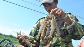 20120808103233_shrimp-270x150